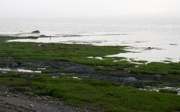 south shore egret